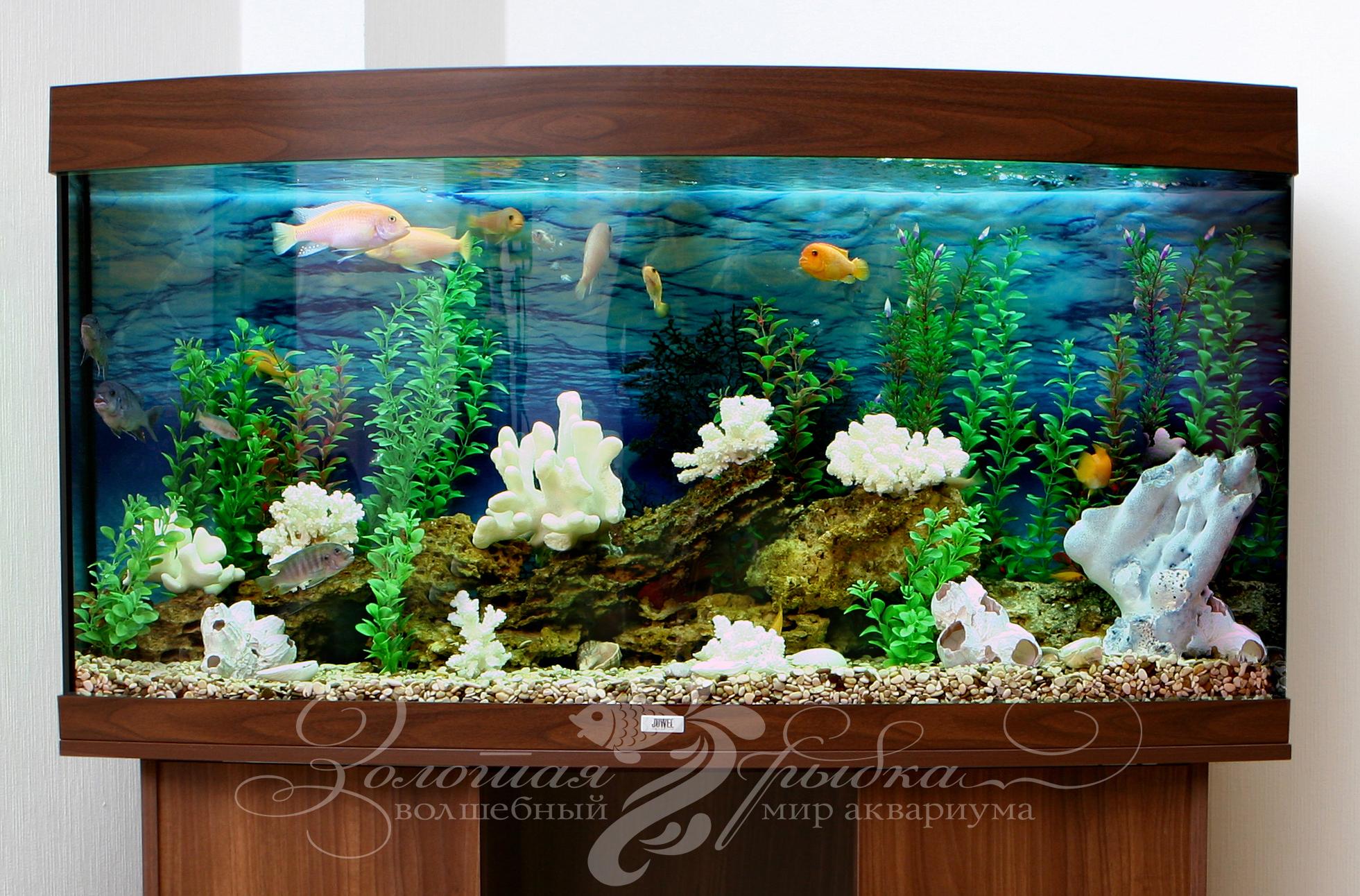 аквариумов картинки дизайн