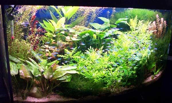 оформление аквариума живыми растениями фото.