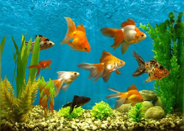 картинки для аквариума по фен шую шифокорлари